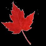 maple-leaf_643292_68194965